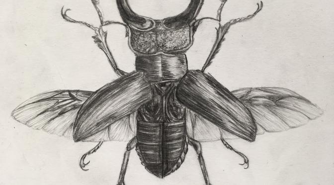 Let It Beetle